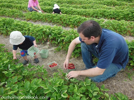 Picking Strawberries - Dan and Brendan