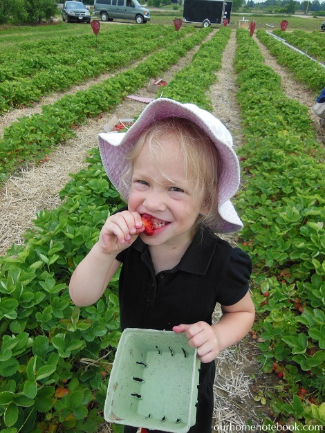 Picking Strawberries - Emma tasting